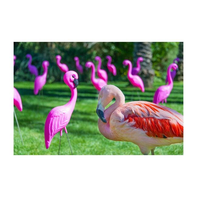 Lawn Flamingo - Art - 1