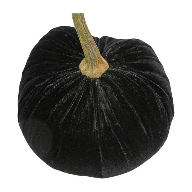 Velvet Pumpkin, Ebony