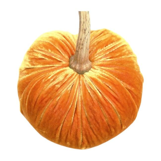 Velvet Pumpkin, Carrot