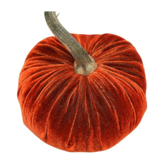 Velvet Pumpkin, Apricot