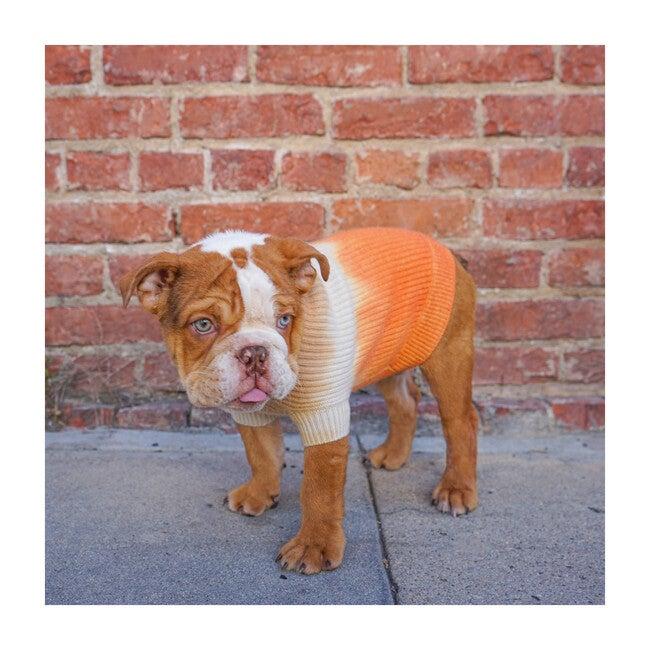 The Major Sweater, Tangerine