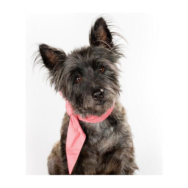 Necktie, Pink Polkadot