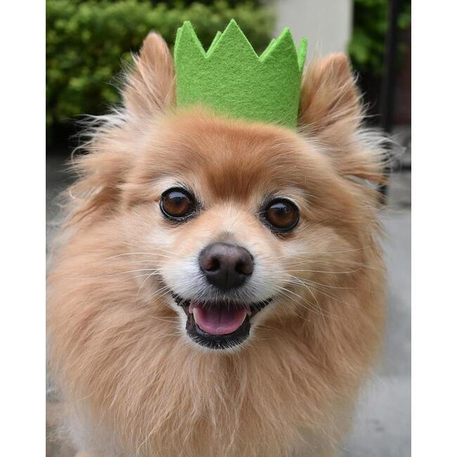 Party Beast Crown, Green