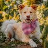 Neckwear, Berry Gingham - Dog Bandanas & Neckties - 2