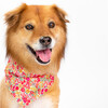 Neckwear, Red Floral - Dog Bandanas & Neckties - 2