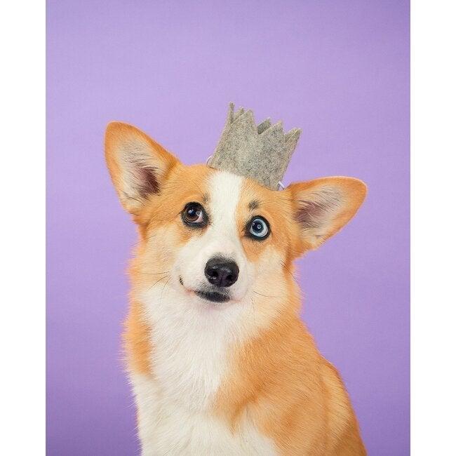 Party Beast Crown, Grey