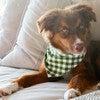 Neckwear, Forest Gingham - Dog Bandanas & Neckties - 2