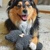 Charcoal Lavender Bedtime Bear, Wildflower - Pet Toys - 2