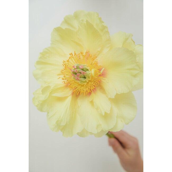 Yellow Peony I