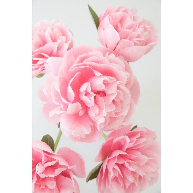 Pink Peony III