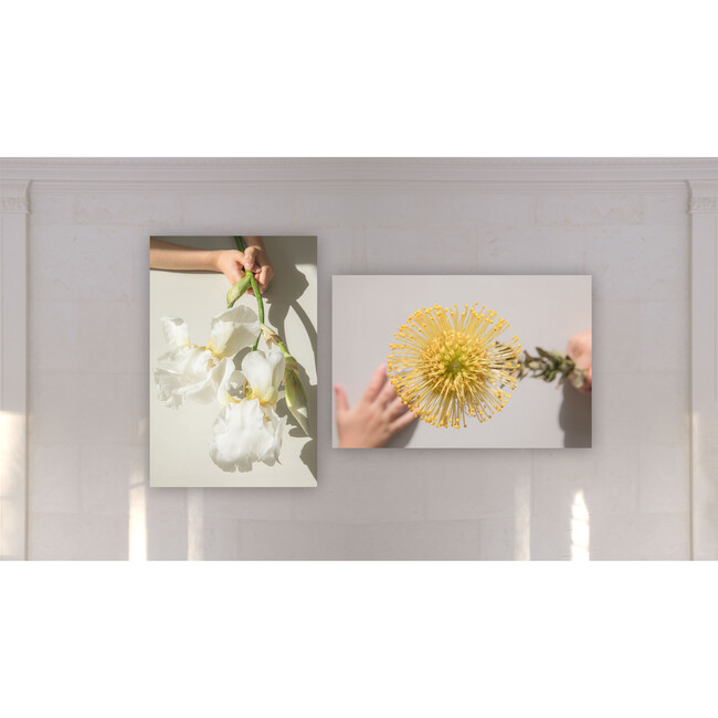 Yellow Protea I