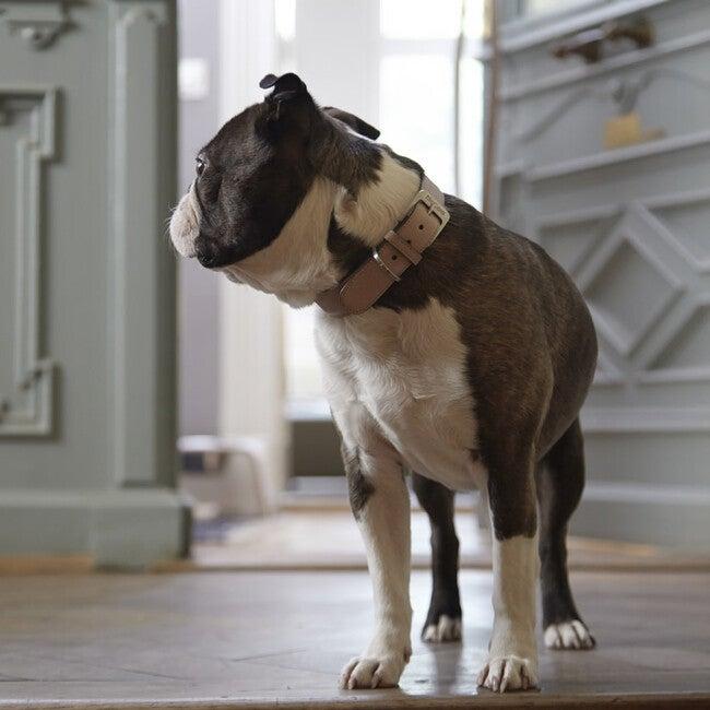 Torino Dog Collar, Powder