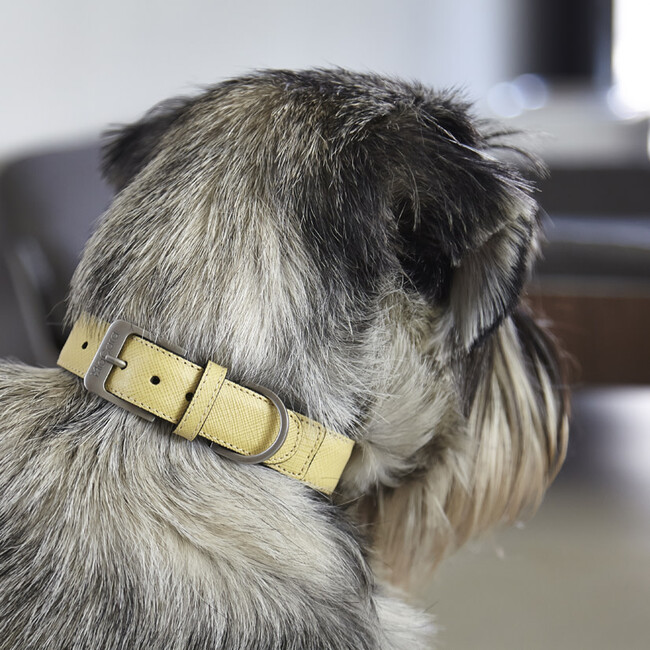 Torino Dog Collar, Lemon