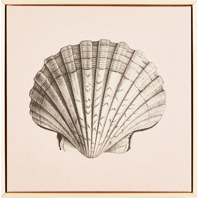 Scallop Shell Canvas Framed Art, Pink
