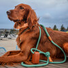 Ray Harness, Mint Green - Collars, Leashes & Harnesses - 2